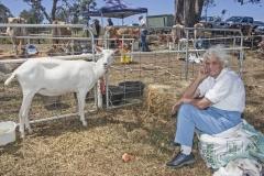 4880 - Thelma Wheatley form Jellat Jellat - entered her Saanen goats.